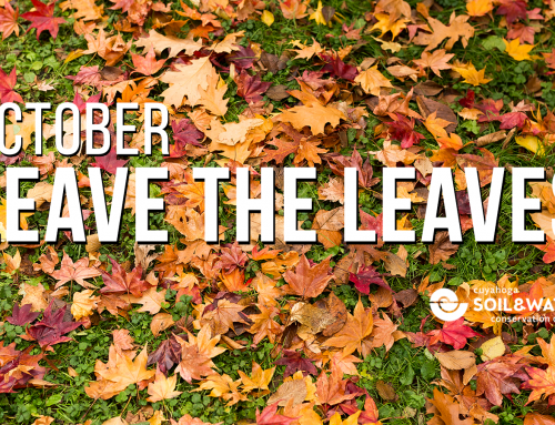 October Reminder from Cuyahoga Soil & Water Conservation District